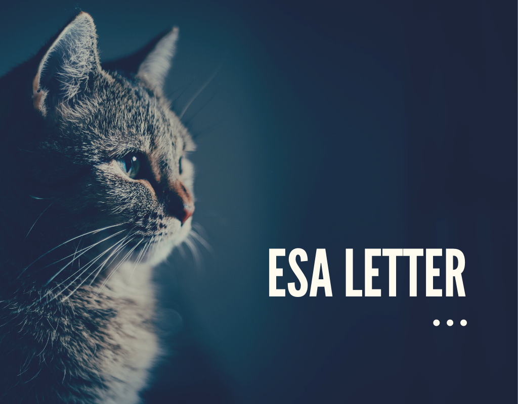 ESA Letter Greensboro, ESA Letter, Emotional Support Animal Counseling Greensboro, Emotional Support Animal Counseling, Emotional Support Animal Counseling Near Me, Greensboro Counselors That Writes ESA Letter, ESA Letter Online, ESA Letter Near Me, ESA Letter For My Apartment, ESA Letter For Airplane